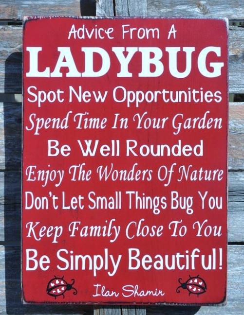 Ladybug Wish