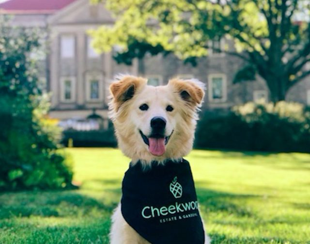 Cheekwood Dog's Night Out