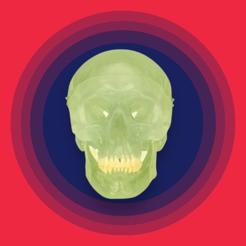 Glow in the Dark Human Skull Anatomy Model