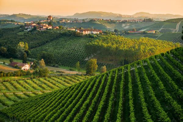 View of hillsides showing the vineyards of Poderi Dei Bricchi Astigiani, the producer of Barbera D'Asti DOCG 2019