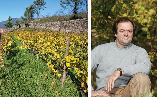 Terraced vineyard of producer of Muros Antigos Escolha Vinho Verde 2020 and a photo of winemaker Anselmo Mendes.