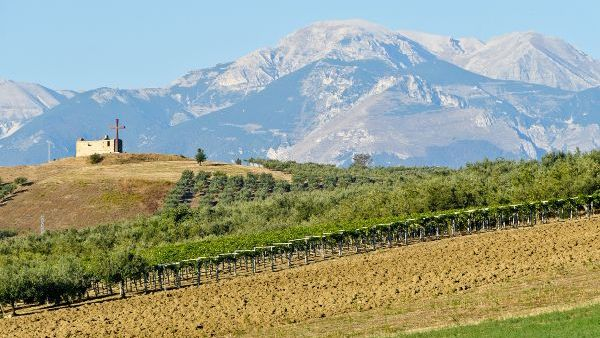 Vineyard of Quattro'sproducer, Fontamara with vine tressles in the foreground and mountains in the distance.
