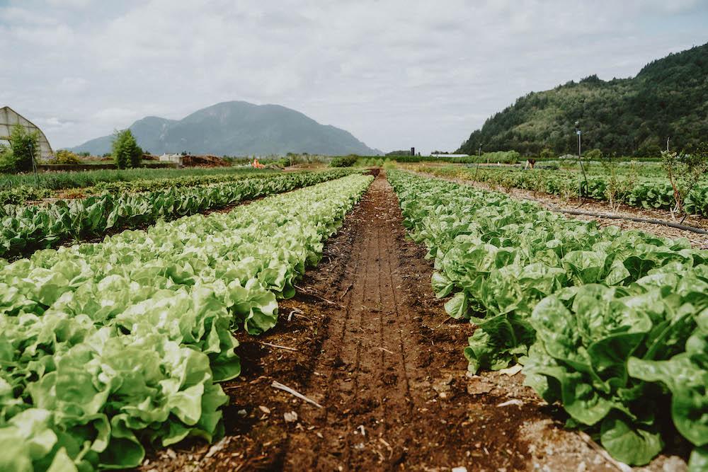 Organic, No-Till Gardening Course