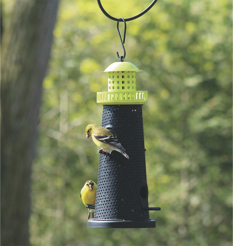 Clean your bird feeders every two weeks.