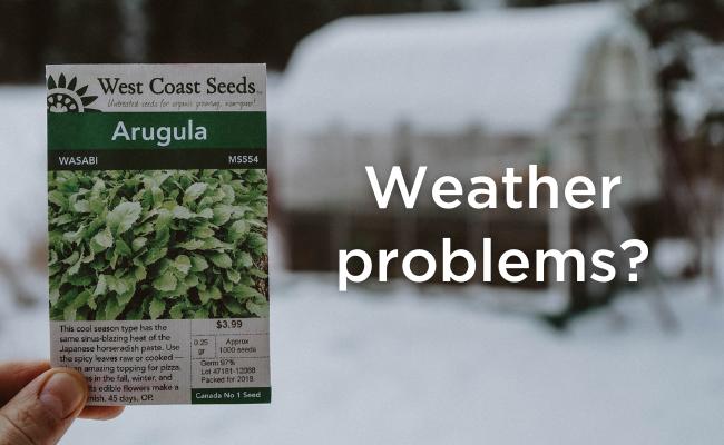 Plant arugula seeds in your Microgreen Garden