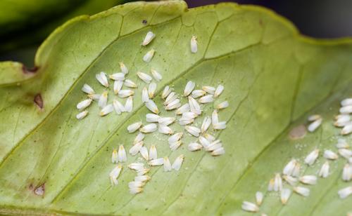 West Coast Seeds