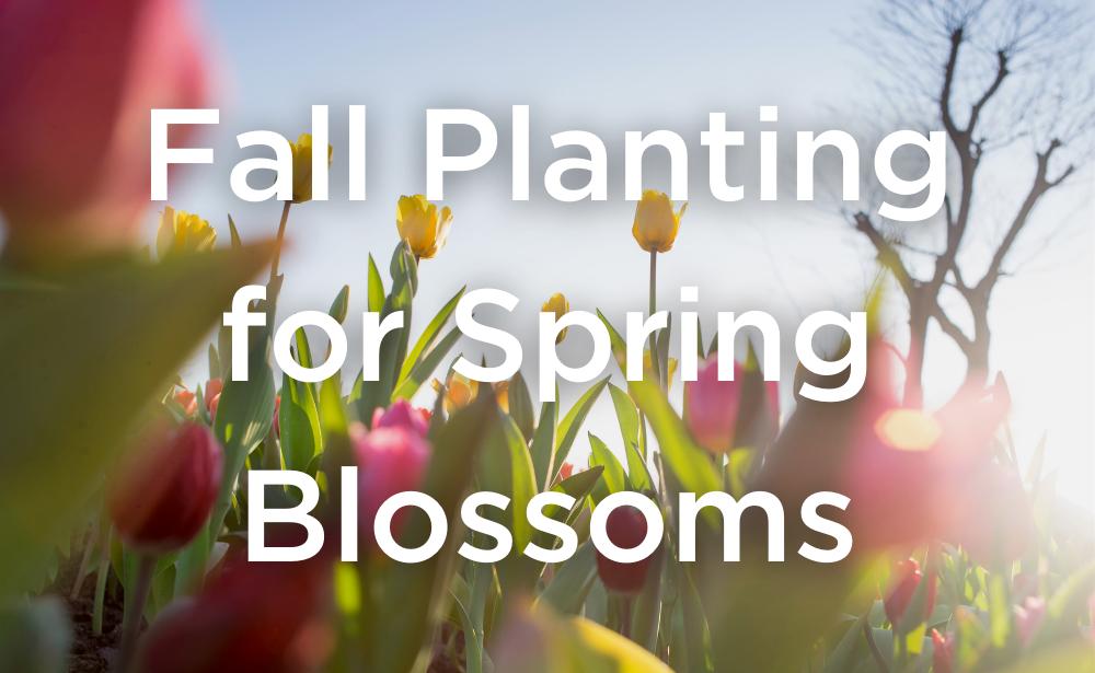 West Coast Seeds Fall Planting Bulbs