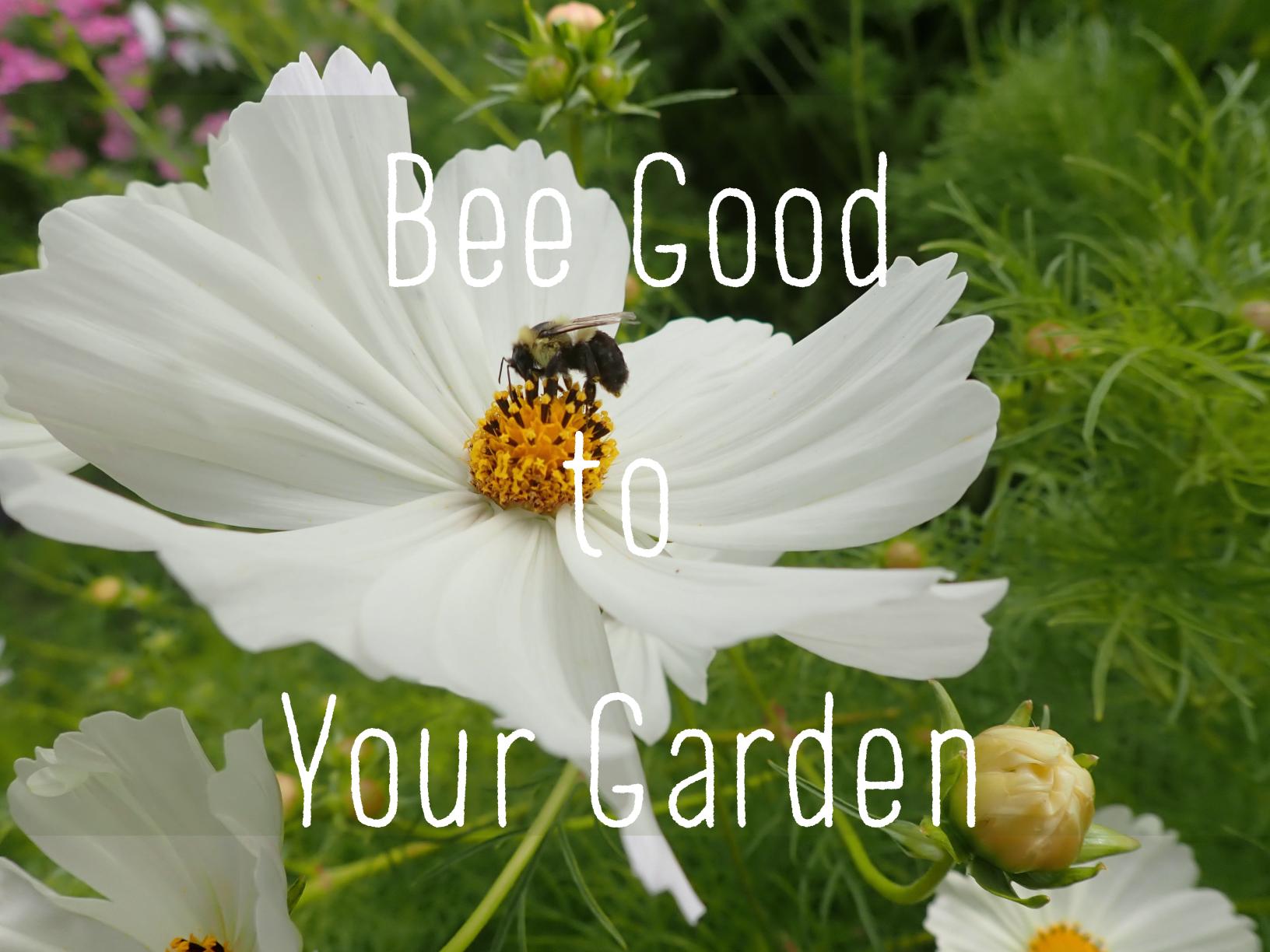 Dr. Bonnie Henry Pollinator Blend