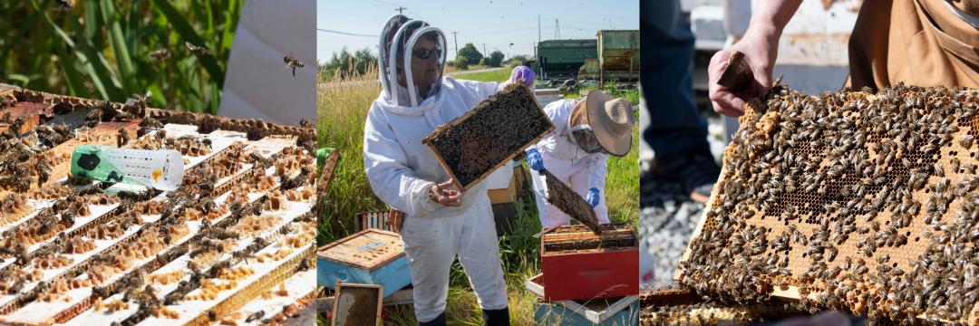Beginner Beekeeping Series