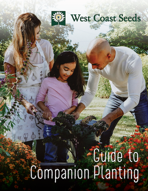 West Coast Seeds Guide to Companion Planting