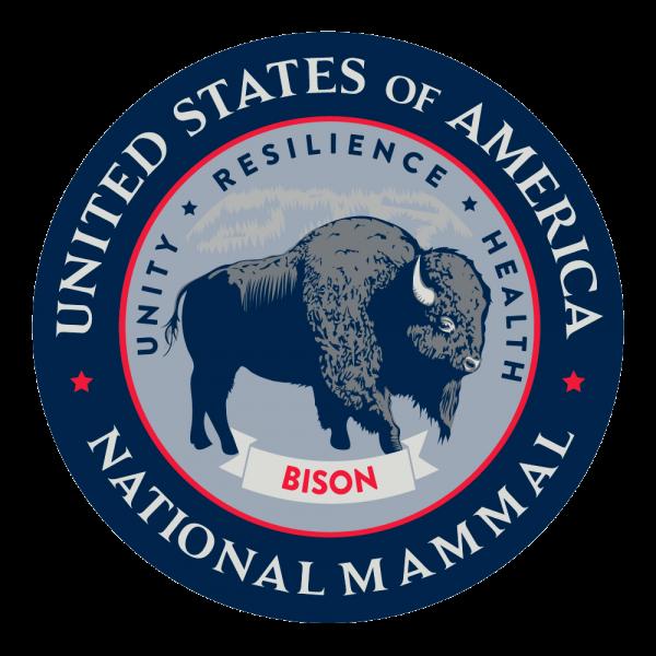 bison american prairie