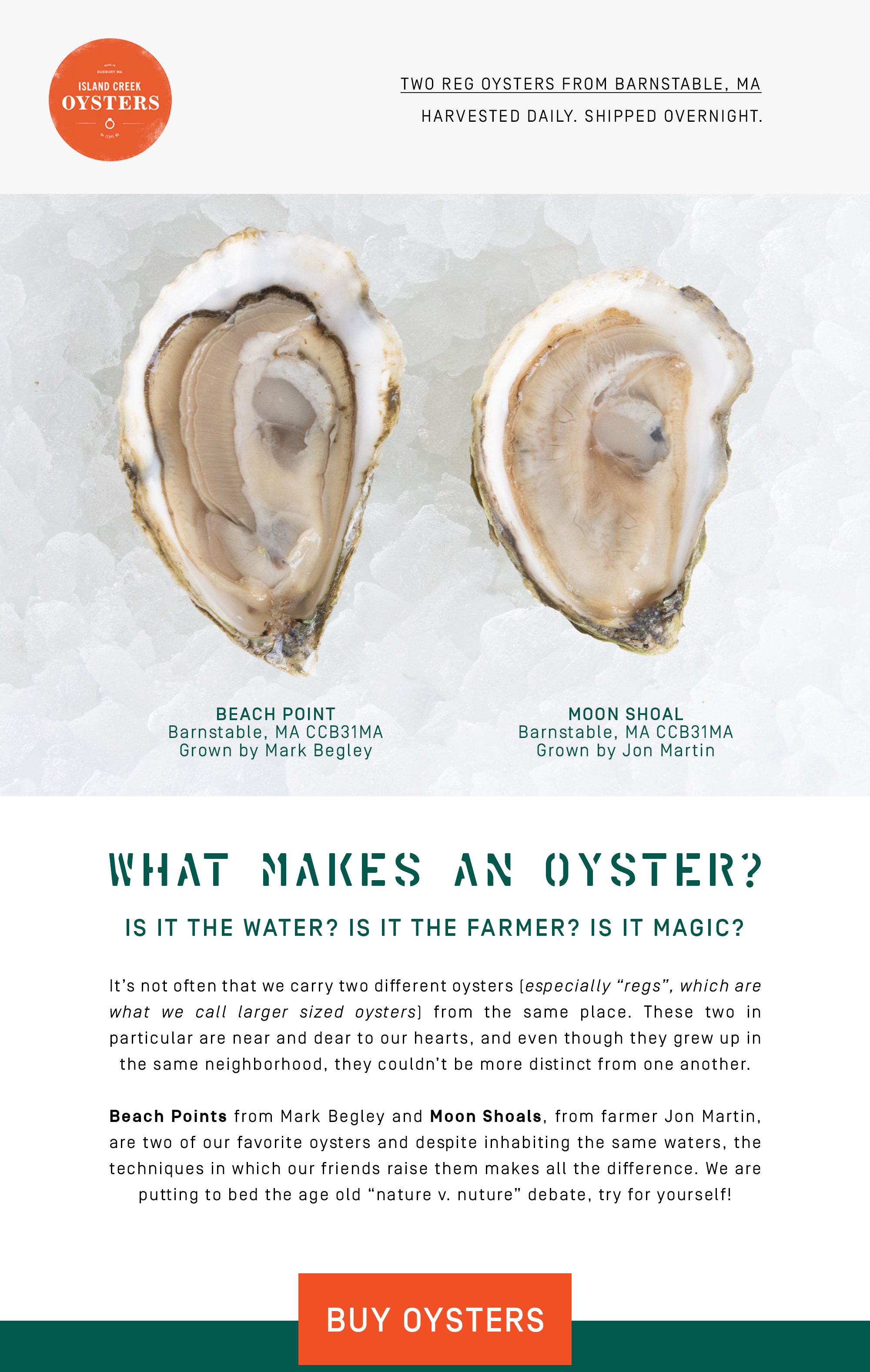 Two Reg Oysters from Barnstable, MA. Moon Shoals from Jon Martin and Beach Points from Mark Begley.
