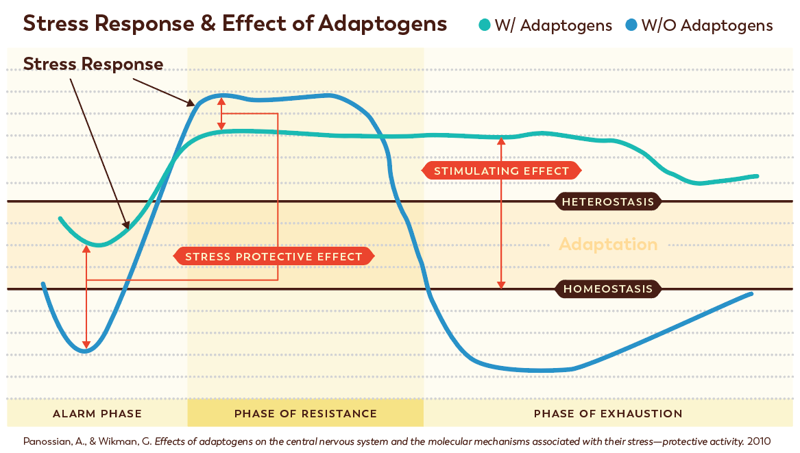 Stress Response and Effect of Adaptogens