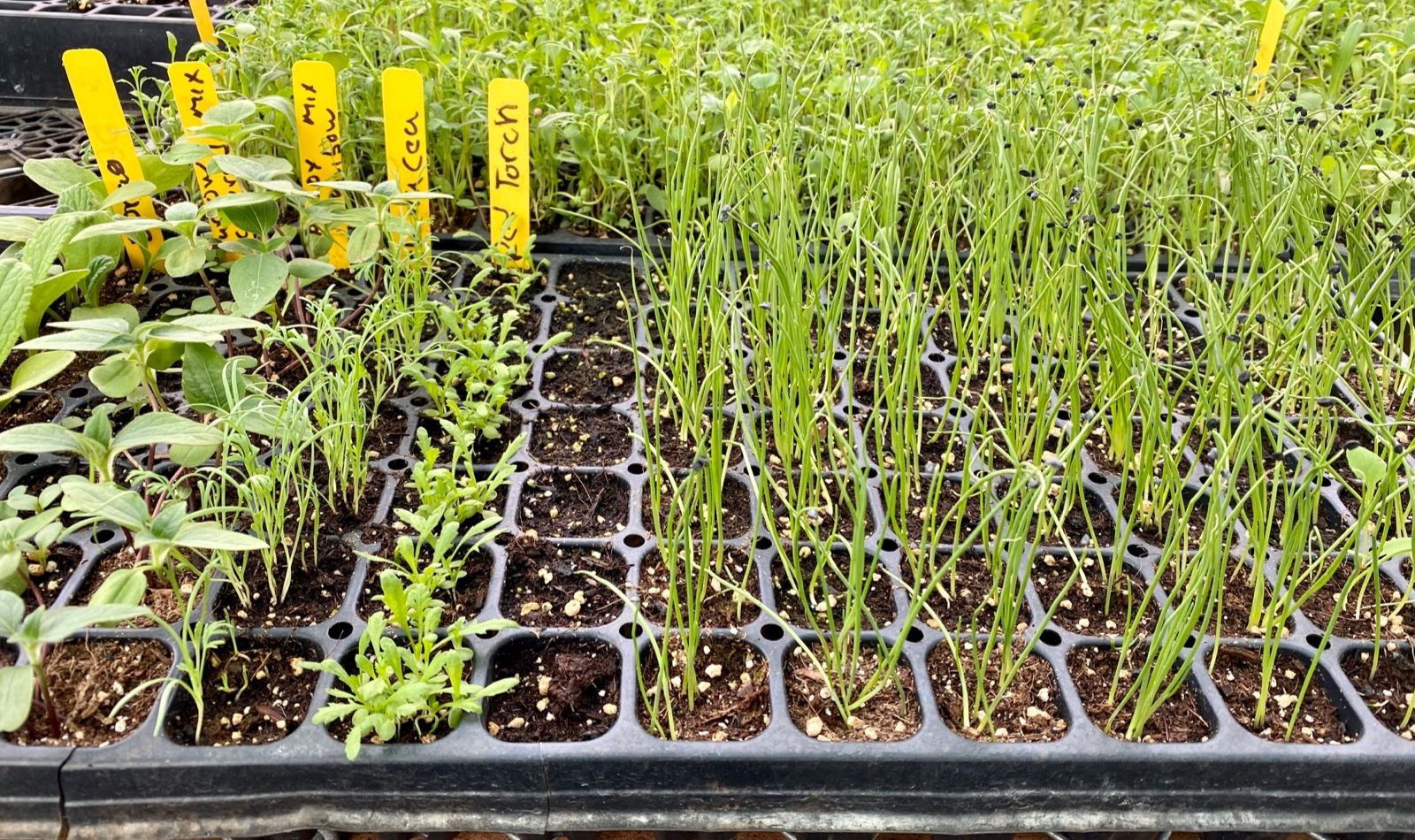 plant more crops!