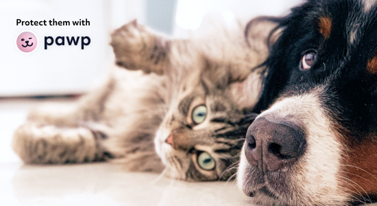 Sometimes emergency vet visits are unavoidable. Make sure you can afford them...