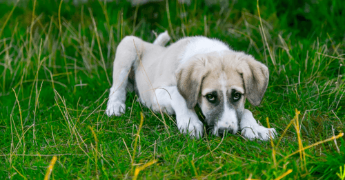 How This Delicious Meal Topper Can Improve Your Dog's Digestion