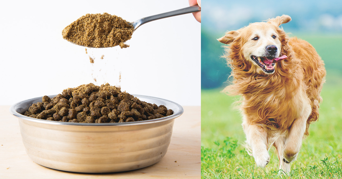 Add This To Your Dog's Food To Give Them A Longer, Healthier Life
