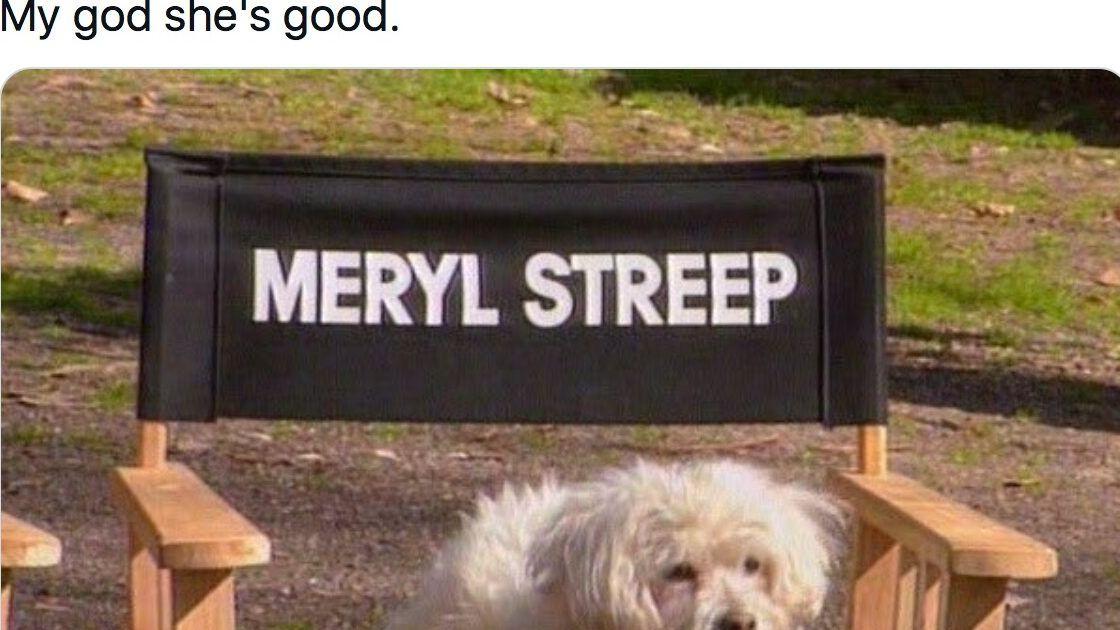 16 Recent Dog Posts That Make Social Media Worth It