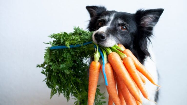12 Vegetables Dogs Can Eat