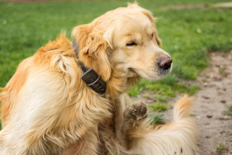 What Causes Hot Spots in Dogs?