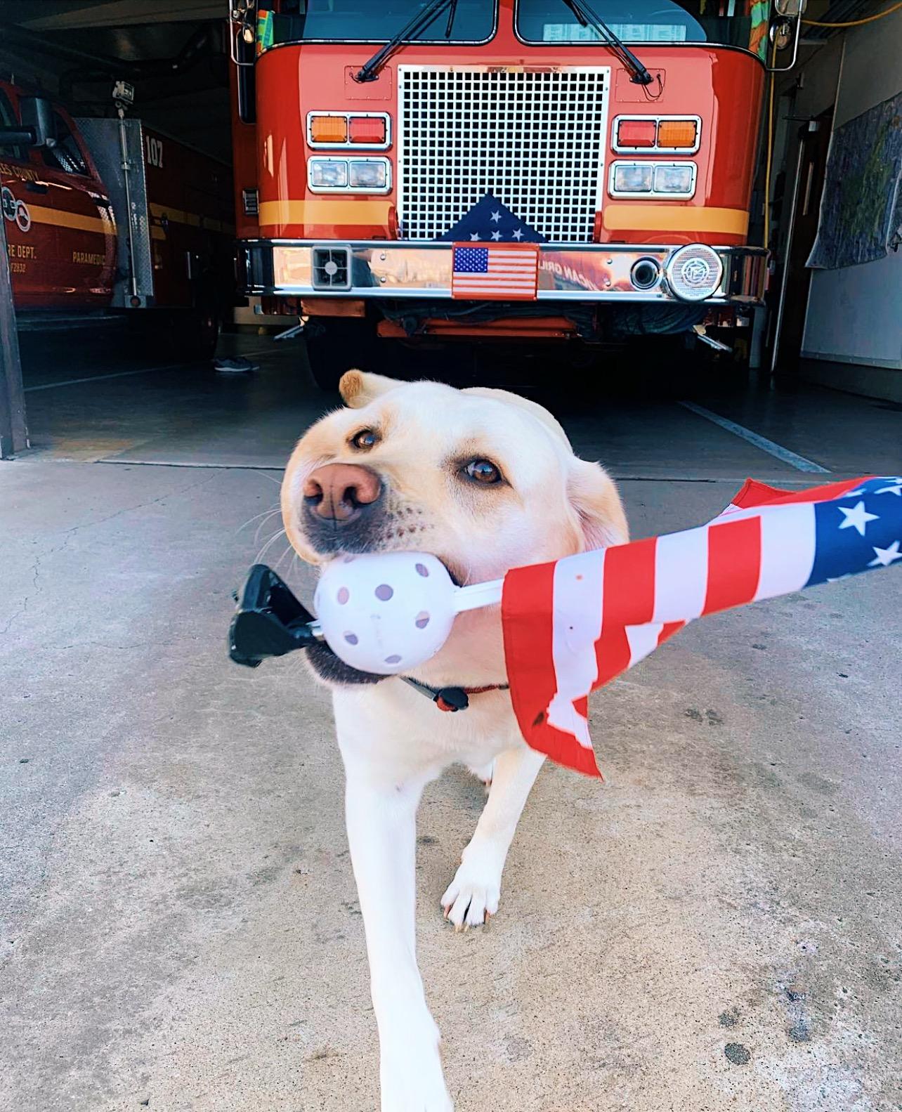 Patriotic Pup Echo