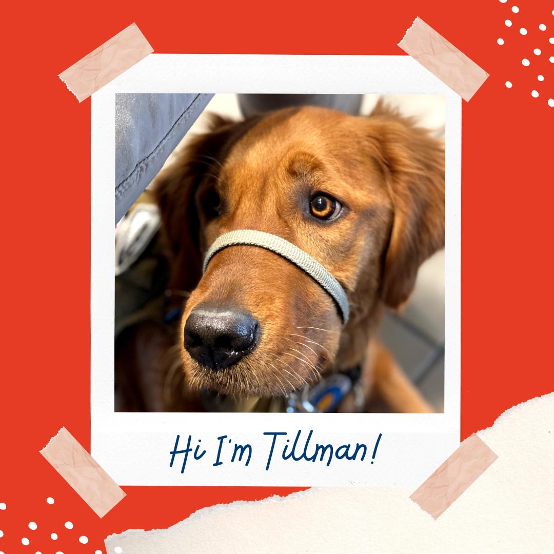 Meet Tillman