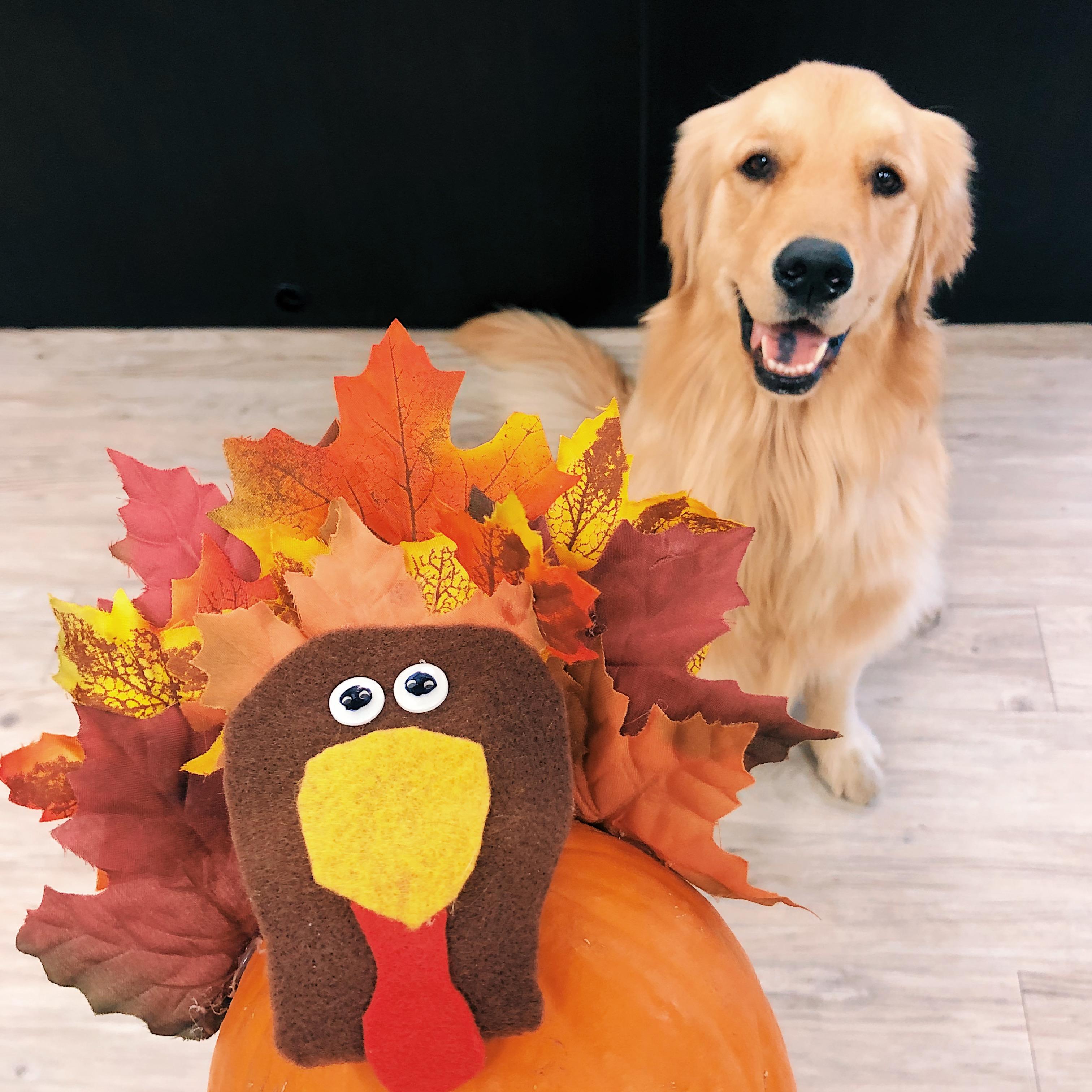Thanksgiving Pet Tips
