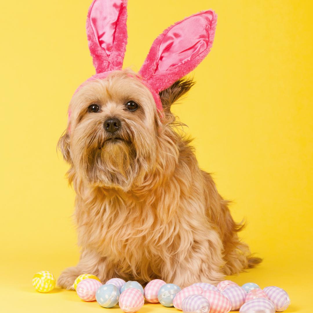 Easter Doggo