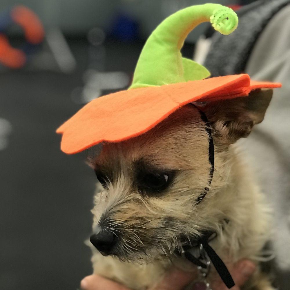 Nature's Select Halloween