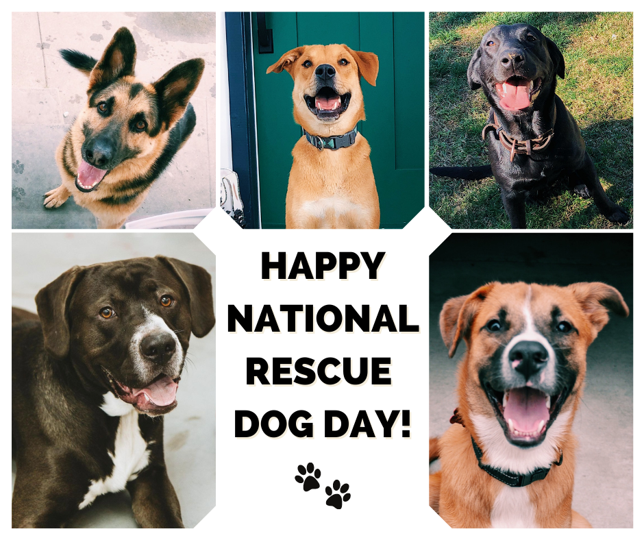 Happy Rescue Dog Day