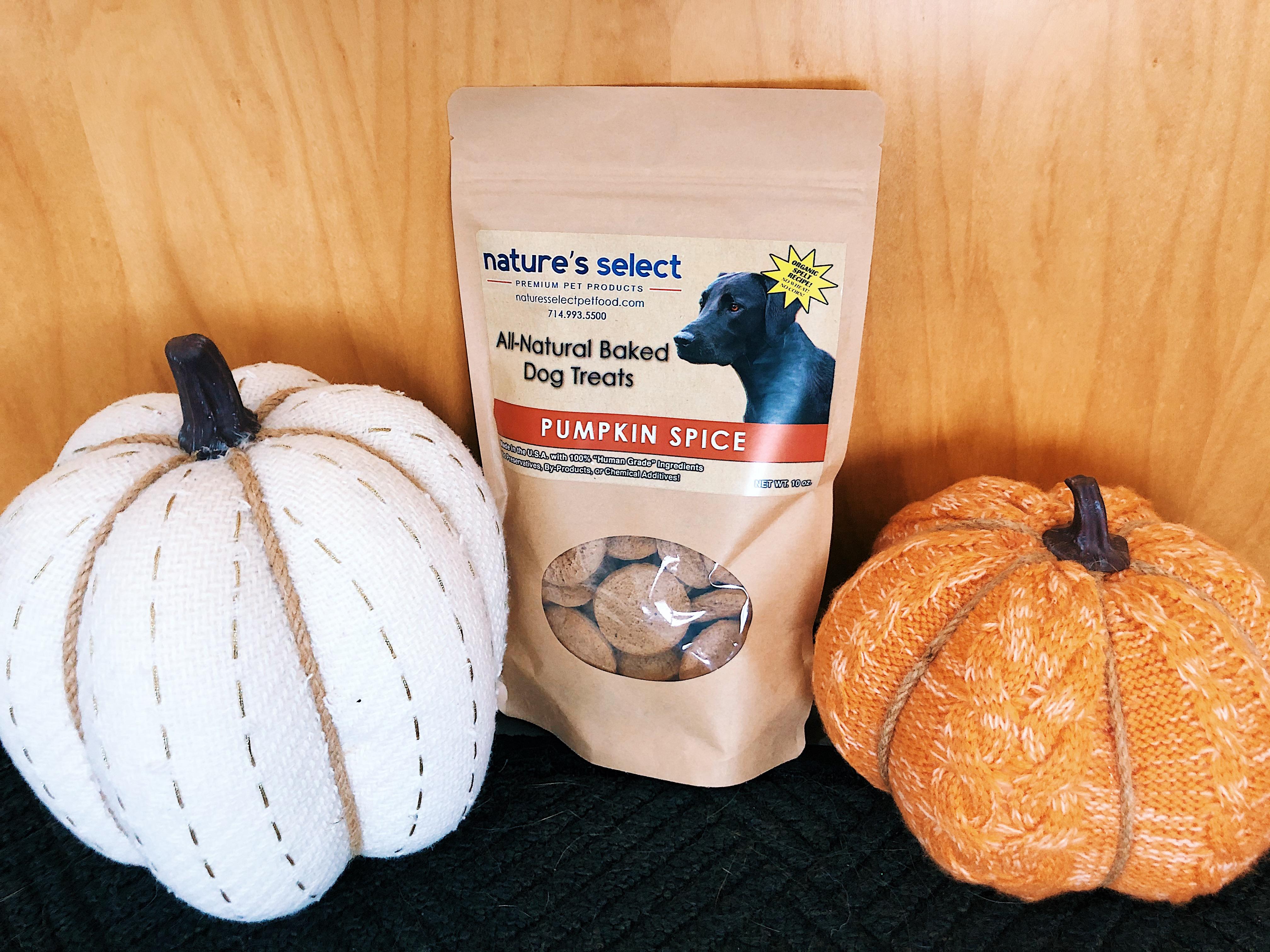 Pumpkin Spice Dog Cookies