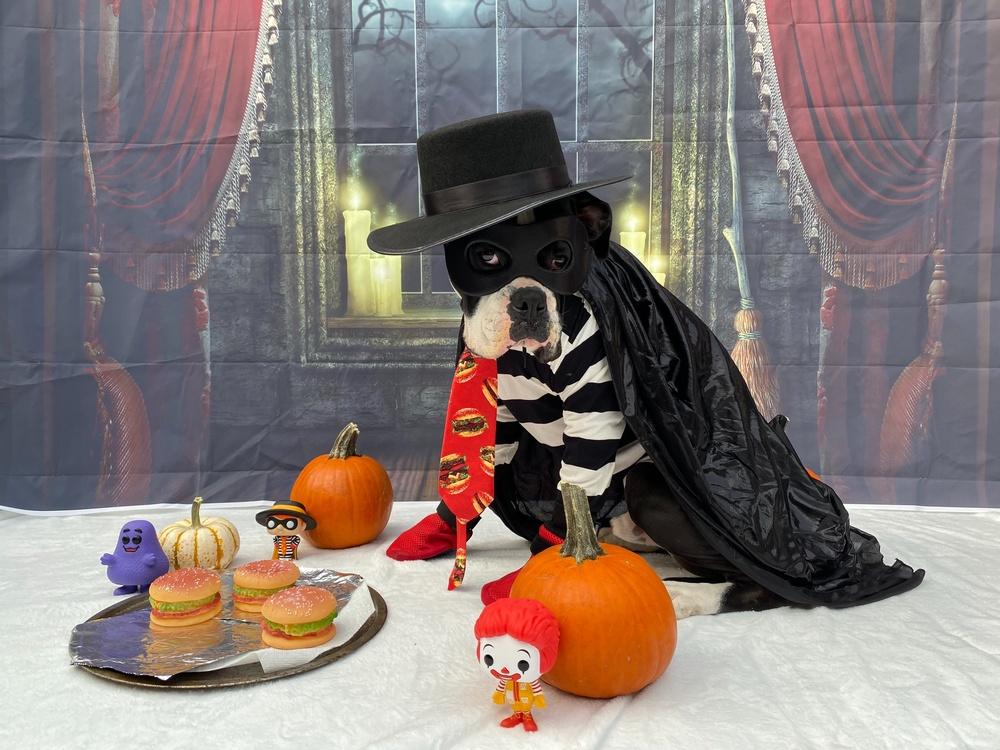 Halloween Dog Costume