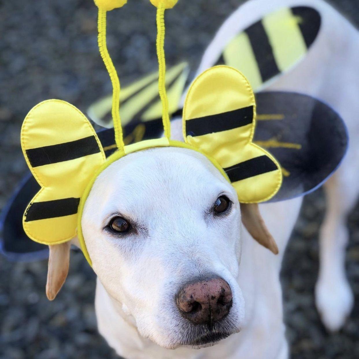 Bumble Bee Dog