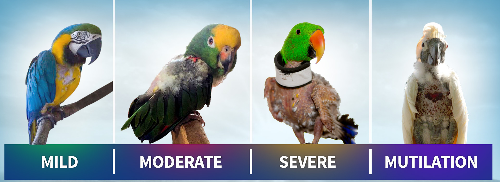 How to choose a parrot collar