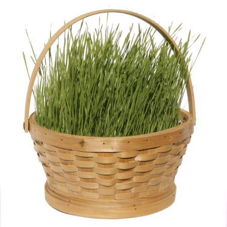 Grow Your Own Spring Grass