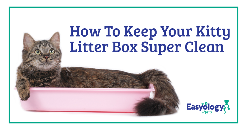 Your Cat's Dirty Litter Box Is Putting You Both at Risk