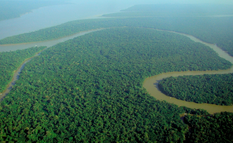 A small chunk of Amazon forest.... like it should look
