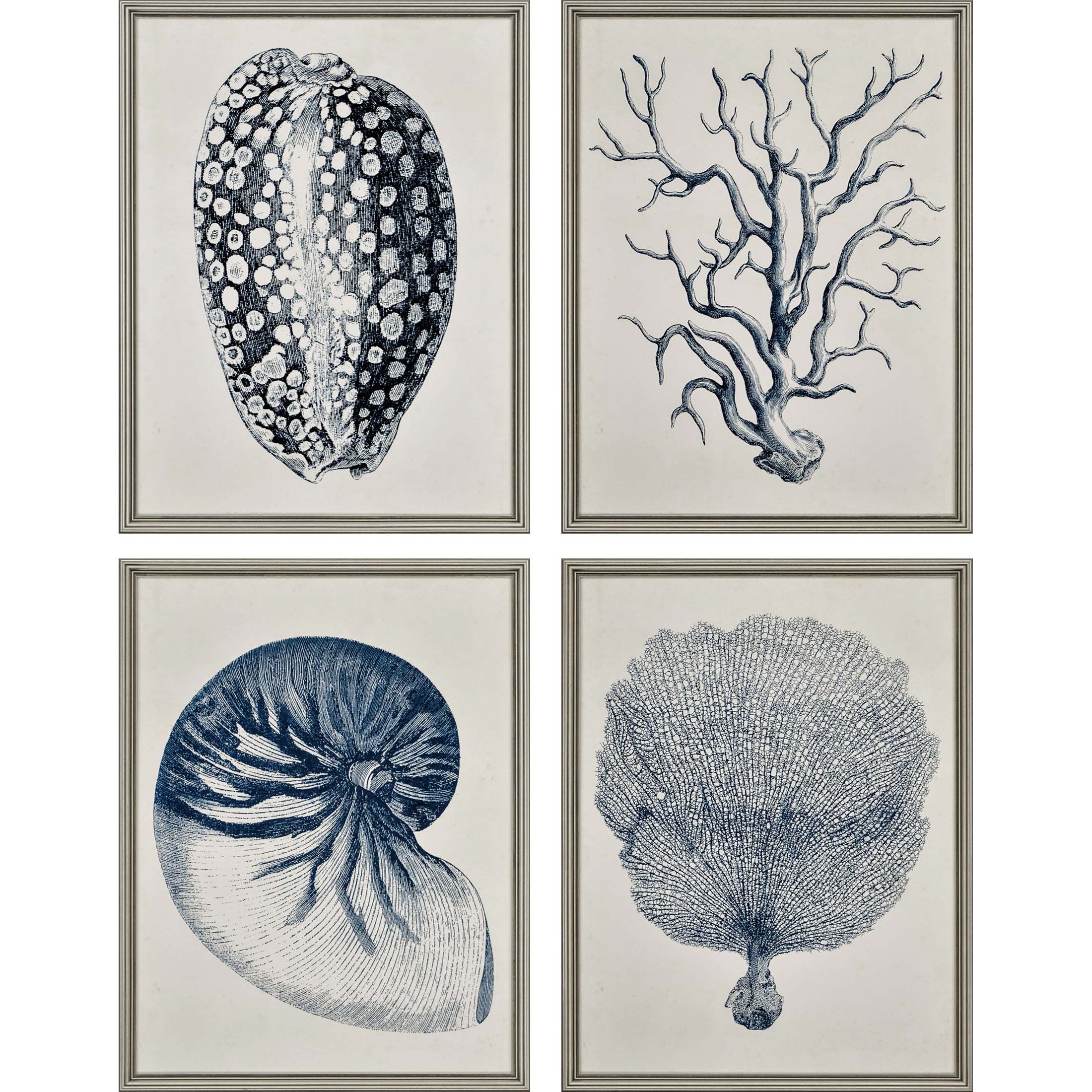 Large Indigo Blue Shells Framed Prints